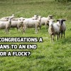 Are congregations a means to an end or a flock to shepherd? 3 examples