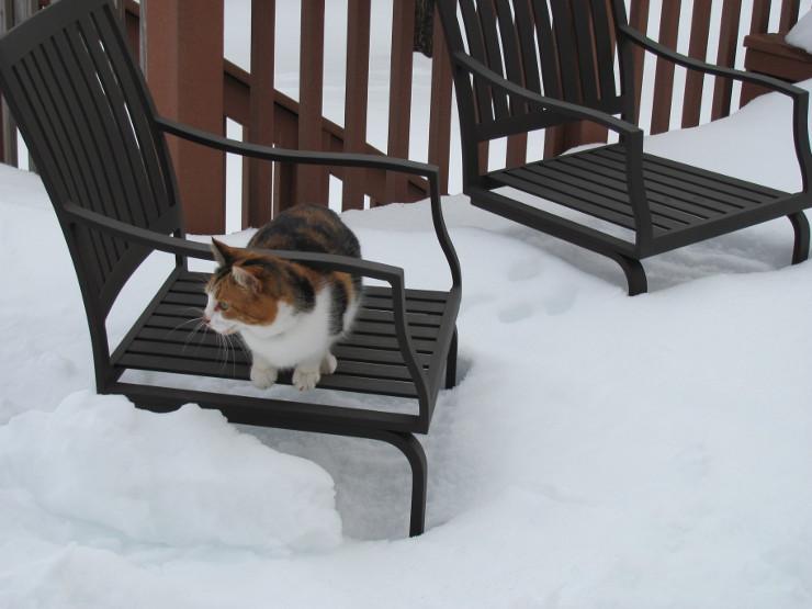 SnowCat740