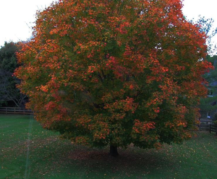 Fall in Virginia  WednesdayintheWord.com