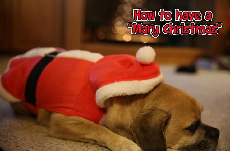 How to Have a Mary Christmas   WednesdayintheWord.com