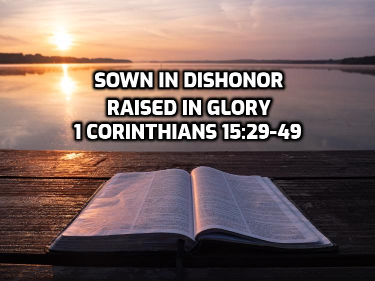 45 1Corinthians 15:29-49 Sown in dishonor, raised in glory | WednesdayintheWord.com