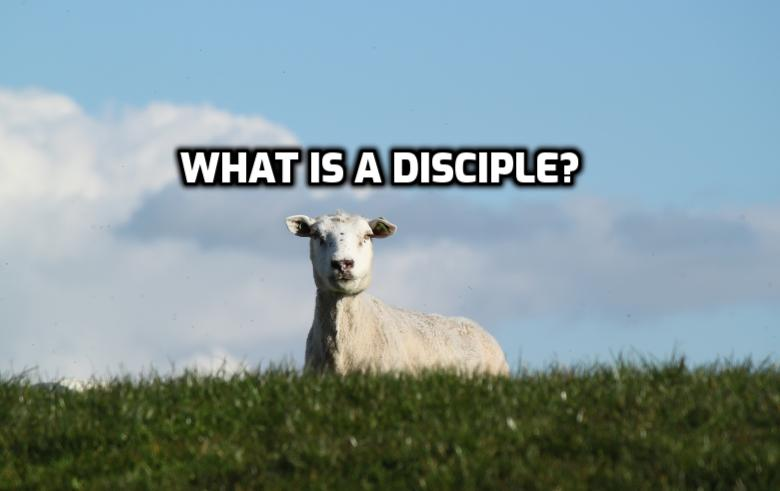 What is a disciple? | WednesdayintheWord.com