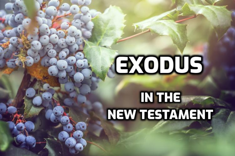 Exodus Quotes in the New Testament | WednesdayintheWord.com