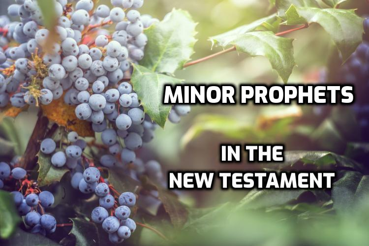 Minor Prophets quoted in the New Testament | WednesdayintheWord.com