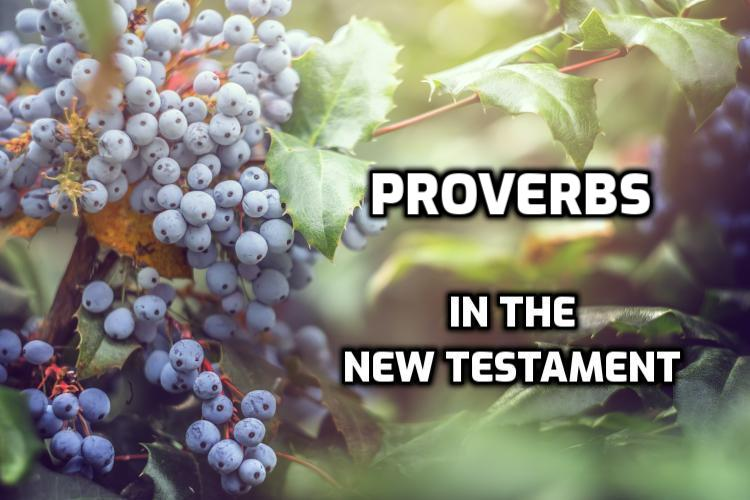 Proverbs Quotes in the New Testament | WednesdayintheWord.com