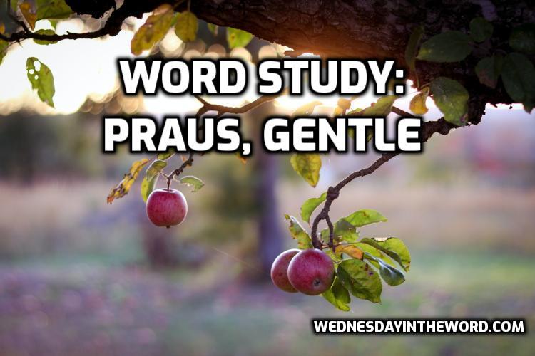 Word Study: praus gentle | WednesdayintheWord.com